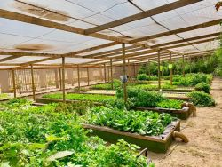 Equestrian Farm - Vegetable Tunnels